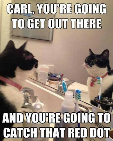 carl_cat_red_dot_mirror